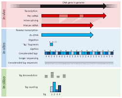 serial analysis of gene expression wikipedia
