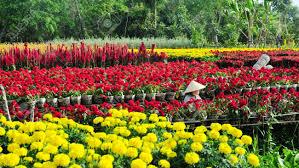 Flower Garden Hanoi by Sa Dec Flower Gardens In Mekong Delta Vietnam