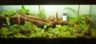 terrarium from old aquarium terraria cultivation u0026 equipment