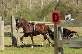 hausman pony farm 2015 st patrick u0027s day drive fest