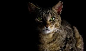 alimentazione casalinga gatto l alimentazione come supporto nella lotta al tumore nel gatto