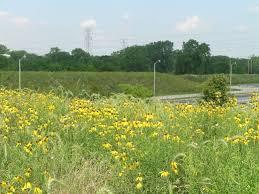 native prairie plants sap netweaver portal