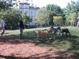 dog run surfaces friends of schuylkill river park dog run