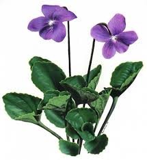 violet flower drawin clip art library