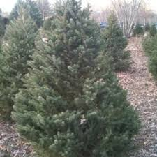 brown s christmas tree brown s christmas tree farm christmas trees 167