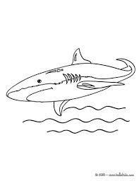 shortfin mako shark coloring pages hellokids