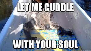 cute cuddly koala memes quickmeme