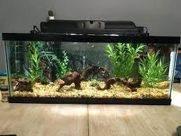 membuat filter aquarium kecil filter aquarium s filter aquarium arwana wecompany me