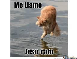 Jesus Cat Meme - jesus cat walks on water by meg11hyn meme center