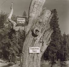 witness to a hanging california s haunted trees kcet