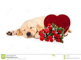 sleeping puppy valentines heart and roses stock photo image
