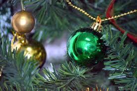 directions marldon christmas trees at darts farm