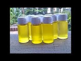 Minyak Bulus Asli Papua minyak bulus papua berkasian untuk kencangkan payudara