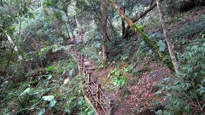 railings tag wallpapers tree railings plants trail wooden