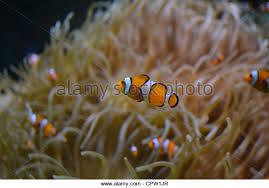 finding nemo stock photos u0026 finding nemo stock images alamy