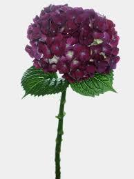flowers international purple hydrangea angel flowers international s a s