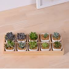 Cute Succulent Pots Compare Prices On Cute Pots Online Shopping Buy Low Price Cute