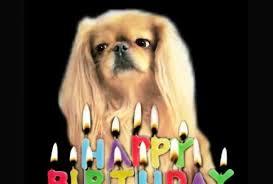 happy birthday singing make a happy birthday dog or cat singing by gooberella