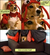 Know Your Meme Dog - dog fort know your meme