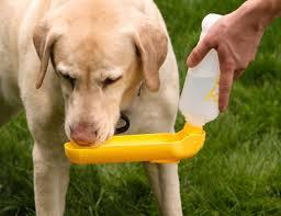 Gadgets For Pets Pet Supplies Gulpy Water Dispenser 20oz Assort Pet Water
