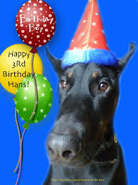 42 best doberman hans images on dobermans this