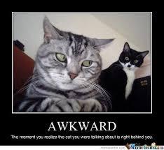 Lol Cat Meme - lol cat meme 09 funny stuff pinterest meme