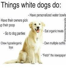 Personalized Memes - things white dogs do have personalized water bowls have their