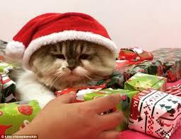 grumpy feline feel sharing christmas haul