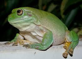 list of amphibians of new zealand for kids kiddle