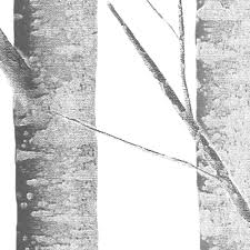 Where To Buy Peel And Stick Wallpaper Birch Tree Wallpaper Peel And Stick