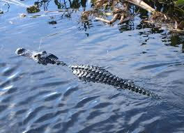 fan boat tours florida everglades airboat tour 06a