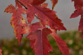 pause beautiful autumn fall colors