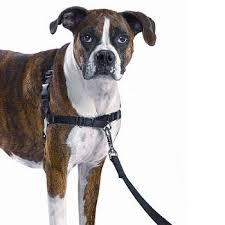 pets harnesses u2013 mooch mooch pets