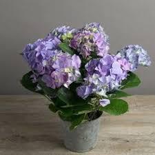 Hydrangea Wedding Beautiful Blooms Hydrangea Wedding Ideas Morsiuskimput Haku Ja