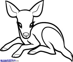cute easy animal drawings roadrunnersae