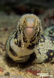 9 best eels images on pinterest fish wildlife and worms