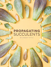 amazon succulents cacti and succulents an illustrated guide to the plants and their