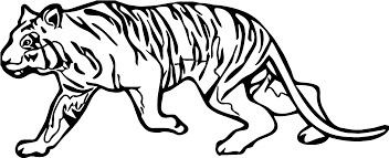 walk quite tiger coloring page wecoloringpage