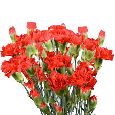 Red Carnations Red Carnation Flower Bouquets Garden Plants U0026 Flowers The