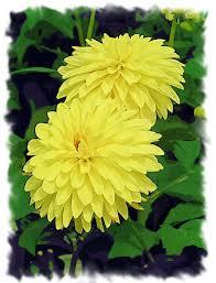 All Types Of Flowers List - yellow flowers weddingbee