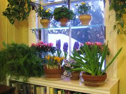 steps to a window garden and