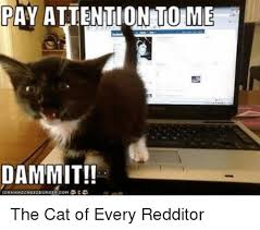 Pay Attention To Me Meme - pay attention to me dammit the cat of every redditor lolcats