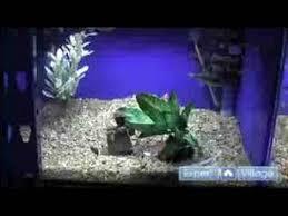 Aquarium Decoration Ideas Freshwater   how to set up aquariums freshwater aquarium decorating ideas youtube