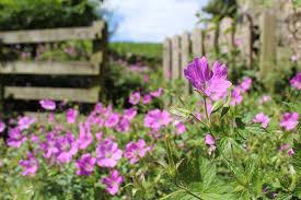 free photo english garden summer garden free image on pixabay