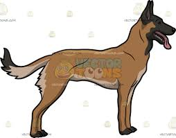 belgian sheepdog training an excited belgian malinois cartoon clipart vector toons