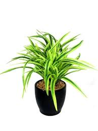 buy fourwalls 27 cm tall artificial drooping miniature dracaena