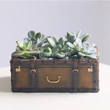 resin suitcase cactus succulent plant flower bed pot box case