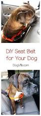 nissan rogue for dogs 4073 best carjojo dogs u0026 cars images on pinterest animals dog