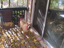 backyard dog runner home outdoor decoration