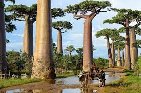beautiful trees from around the world nature babamail